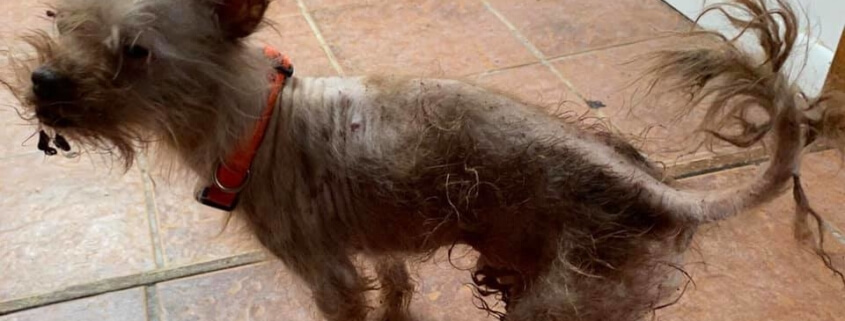 Dead dogs and squalor found at woman's home
