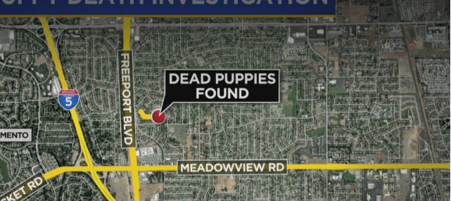 Dead puppies found in trash can