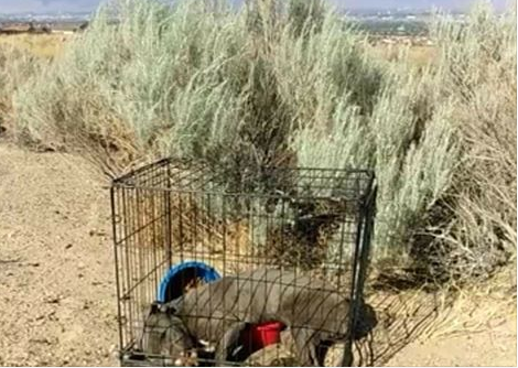 Dead puppy found in cage