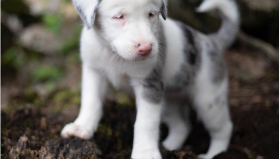 Deaf puppy fell down hole