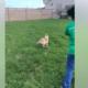 Death row dog video