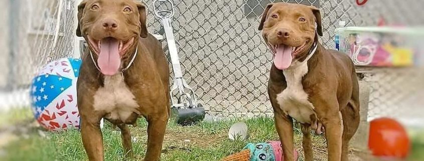 Death row senior dogs