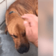 Declining dog won't eat, has until the end of day