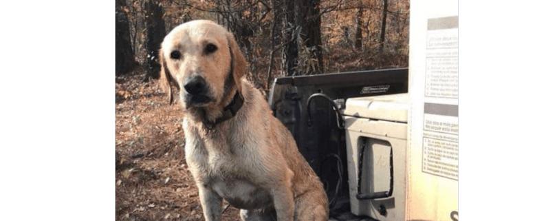 Depraved man shot dog for not retrieving ducks