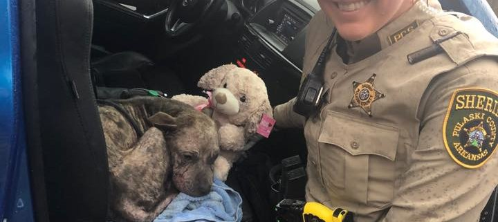 Deputy rescues dog on Thanksgiving