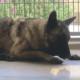 Desperate situation for sick dog