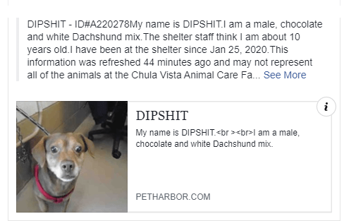 dog lovers angry over name of dog Dipshit
