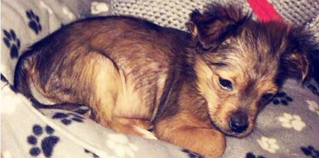 Puppy beaten with hammer may have been microwaved as well