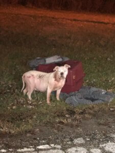Dog abandoned with crate and old pillow