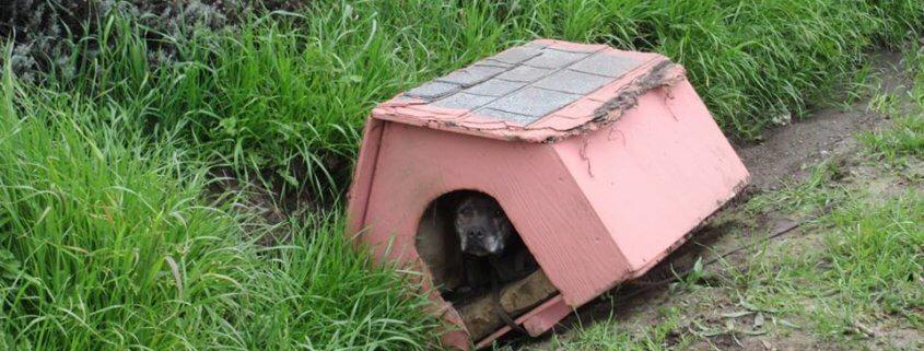 dog abandoned with dog house