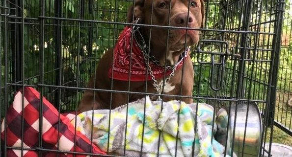 Dog abandoned with heartbreaking note