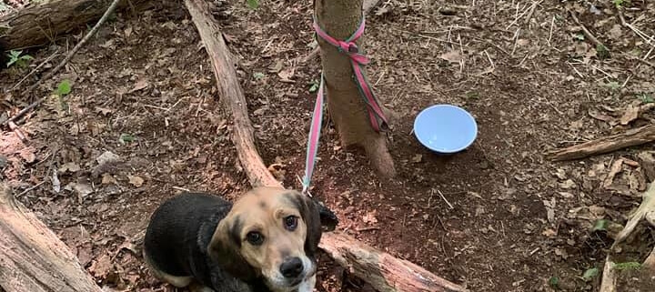 Dog abandoned in the woods