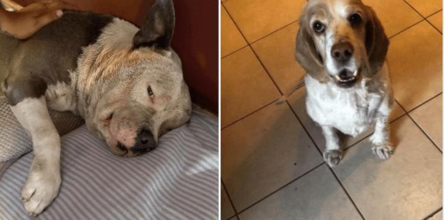 Dog beaten and dog stolen