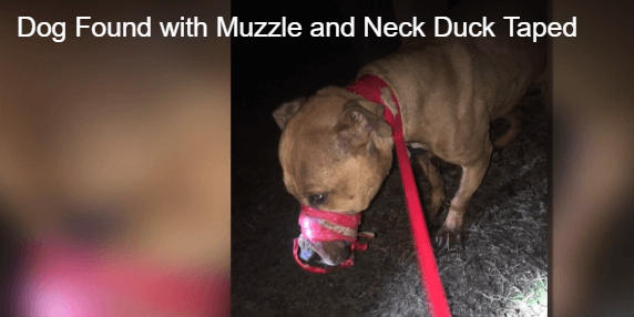 Dog found bound in duct tape
