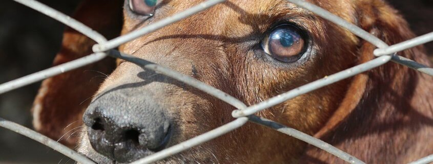 Stock image: Dog burned in a cage - not the dog from this story