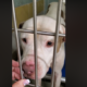 Dog with cancer is alone at shelter