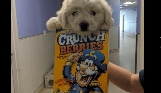 Dog dropped off in a cereal box