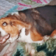 Dog found decapitated on train tracks