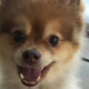Dog found dead after Delta flight