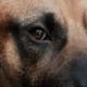 Heroic dog died in devastating fire