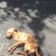 Skeletal dog dumped and left for dead in an alley