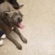 Dog euthanized after owner struggled with muzzle