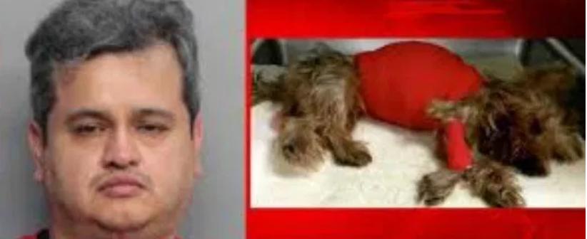 Dog fatally beaten