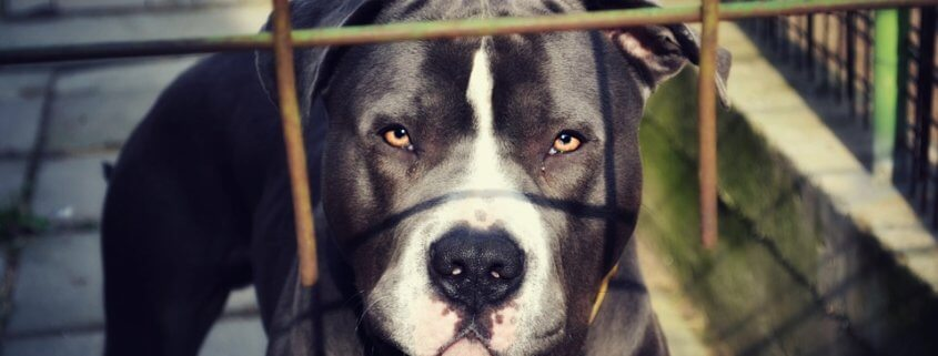 Prison sentence for man involved in dog fighting