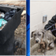 Dog found in trash can