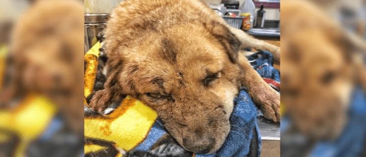 Geriatric dog found shot in the head