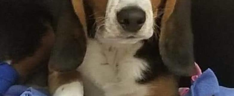 Dog with frostbitten paws returned to owner