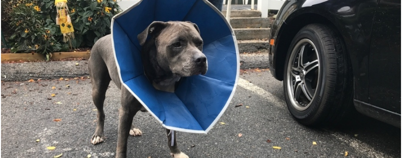 Dog injured in vicious machete attack