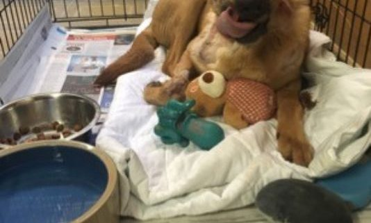 Cruelty case - dog intentionally burned