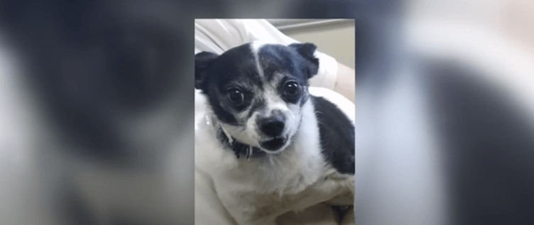 Dog died after being kicked into traffic