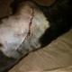 Dog machete attack