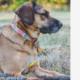 Dog missing after Jeep stolen