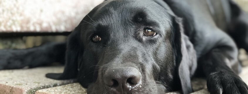 Dog found with mouth and eyes taped shut
