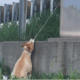 Dog found hanging from overpass