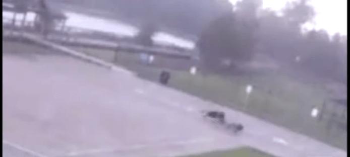 Dog owner struck by lightning