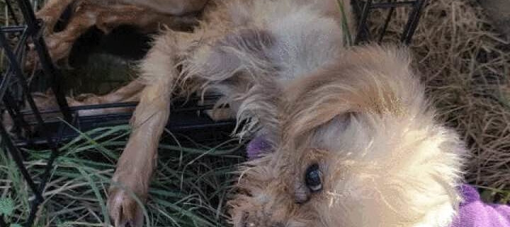 Dying dog found inside of porta potty