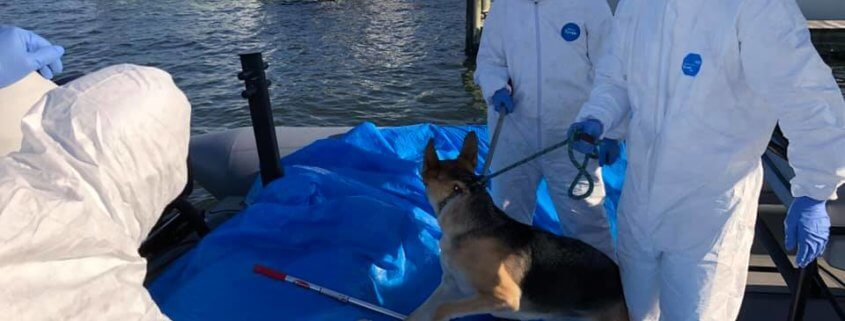 Dog rescued from boat