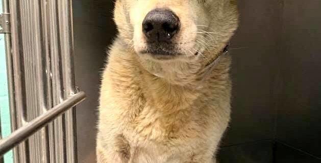dog returned to shelter as blind senior