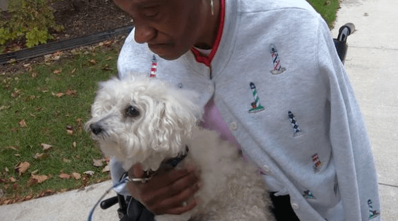 Dog saves woman who had a stroke
