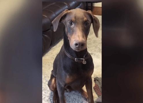 Dog shot by neighbor