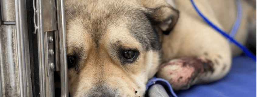Dog shot repeatedly and abandoned in dunes recreation area