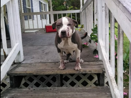 Family's dog shot in the face