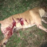 Dog fatally shot