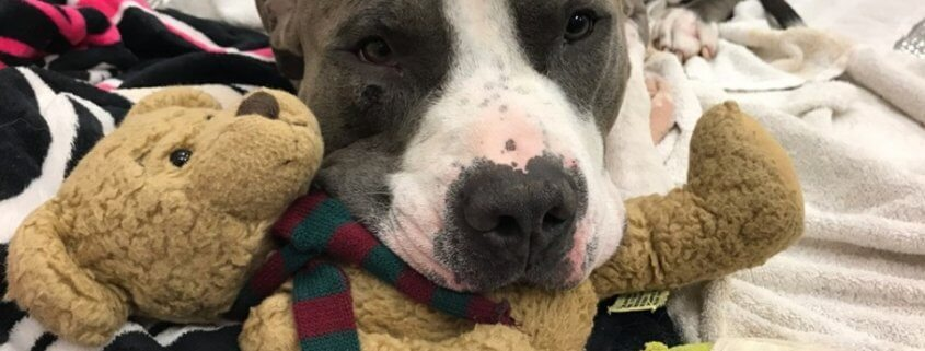 Dog shot multiple times is a survivor