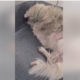 Dog shut down in Texas