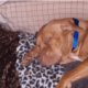 Dog fatally stabbed